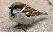 μεγάλο πουλί άντλησης Κεράλα κολλέγιο πορνό